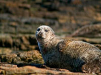 Wildlife Cruise from John OGroats