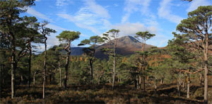 Loch Ness and Glen Affric Tour from Inverness